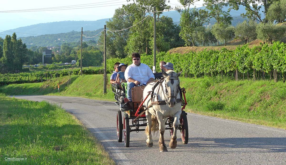 Horse Carriage Tour with Tasting